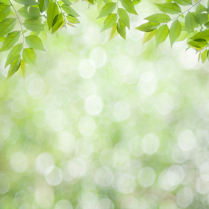 Fresco Verde Foglie Sfondo Verde Naturale Fotografie Stock E Altre