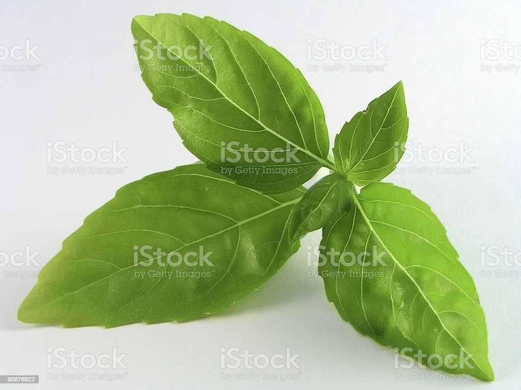 fresh green leaves of basil on light grey background stock photo