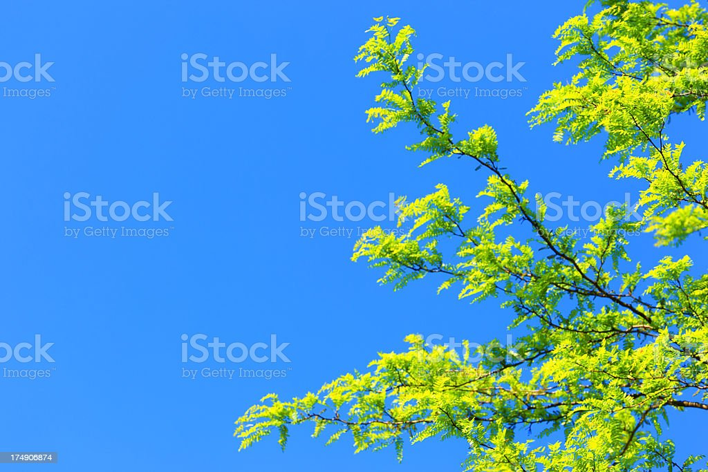 Fresh Green Leaves on Blue Sky Background royalty-free stock photo