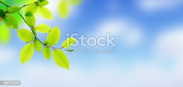 Foliage on defocused sky.