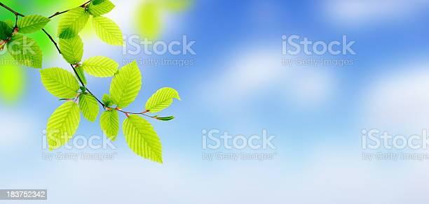 Photo of Fresh Green Leaves - Panorama (XXXL)