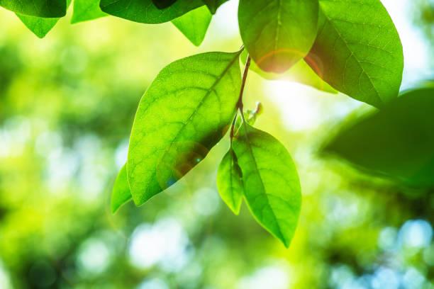 신선한 녹색 잎 - 지속가능한 생활양식 뉴스 사진 이미지