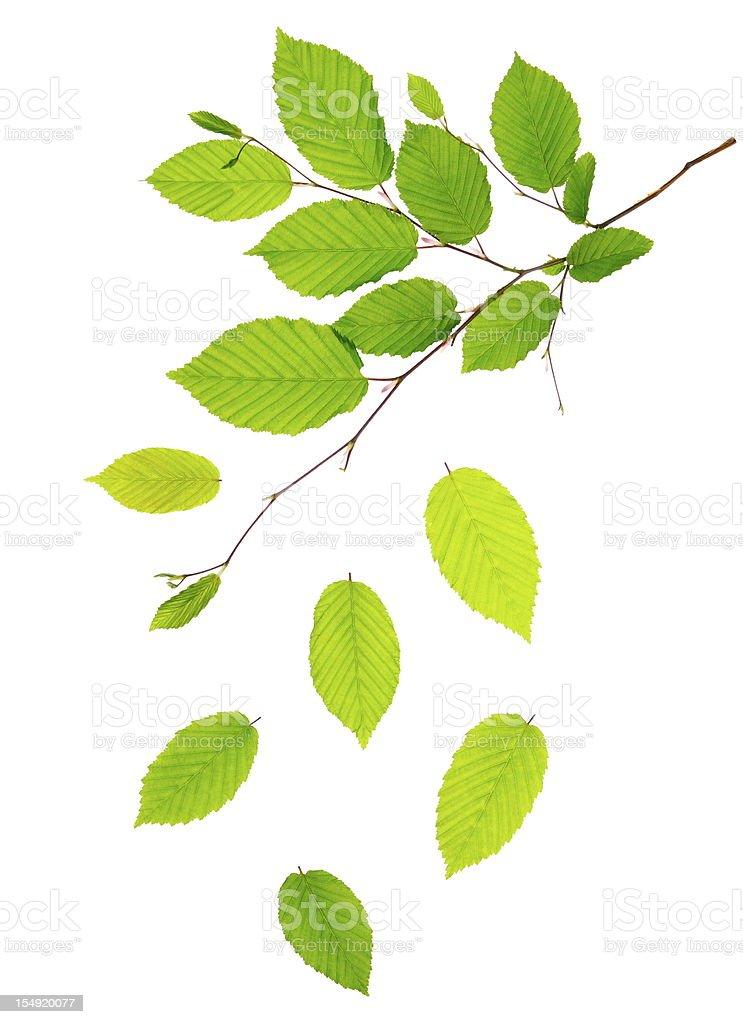 Fresh Green Leaves stock photo