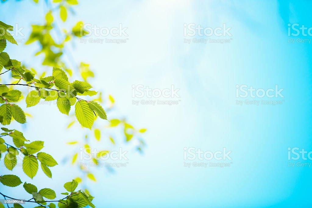 Des feuilles vert - Photo