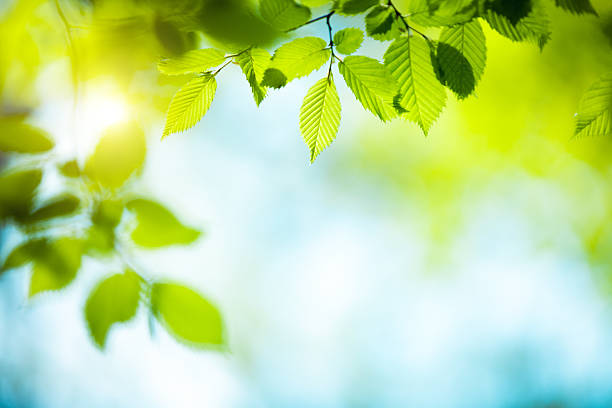 fresh green leaves - branch plant part stock pictures, royalty-free photos & images