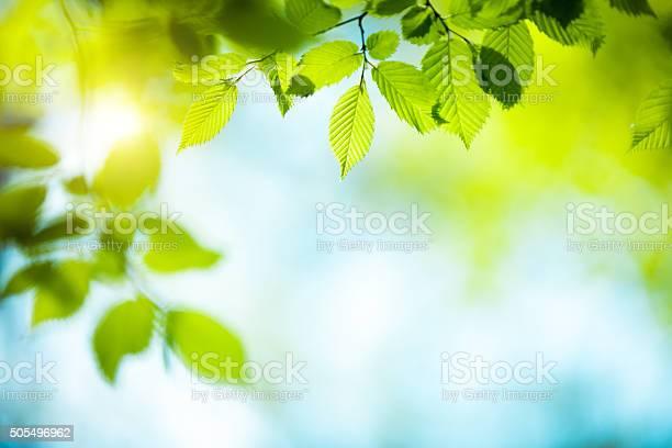Photo of Fresh Green Leaves