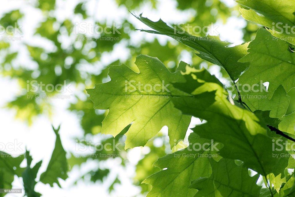Frische grüne Blätter Lizenzfreies stock-foto