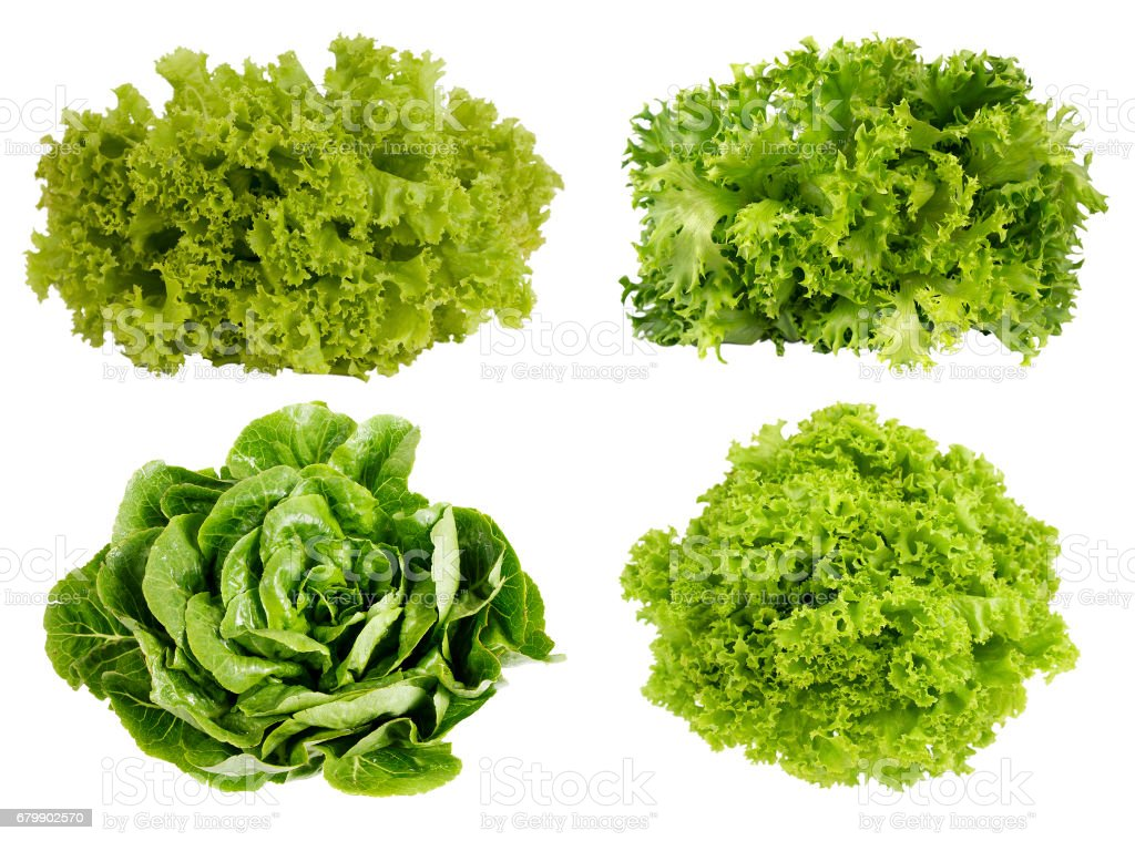Fresh green lettuce isolated on white background. stock photo