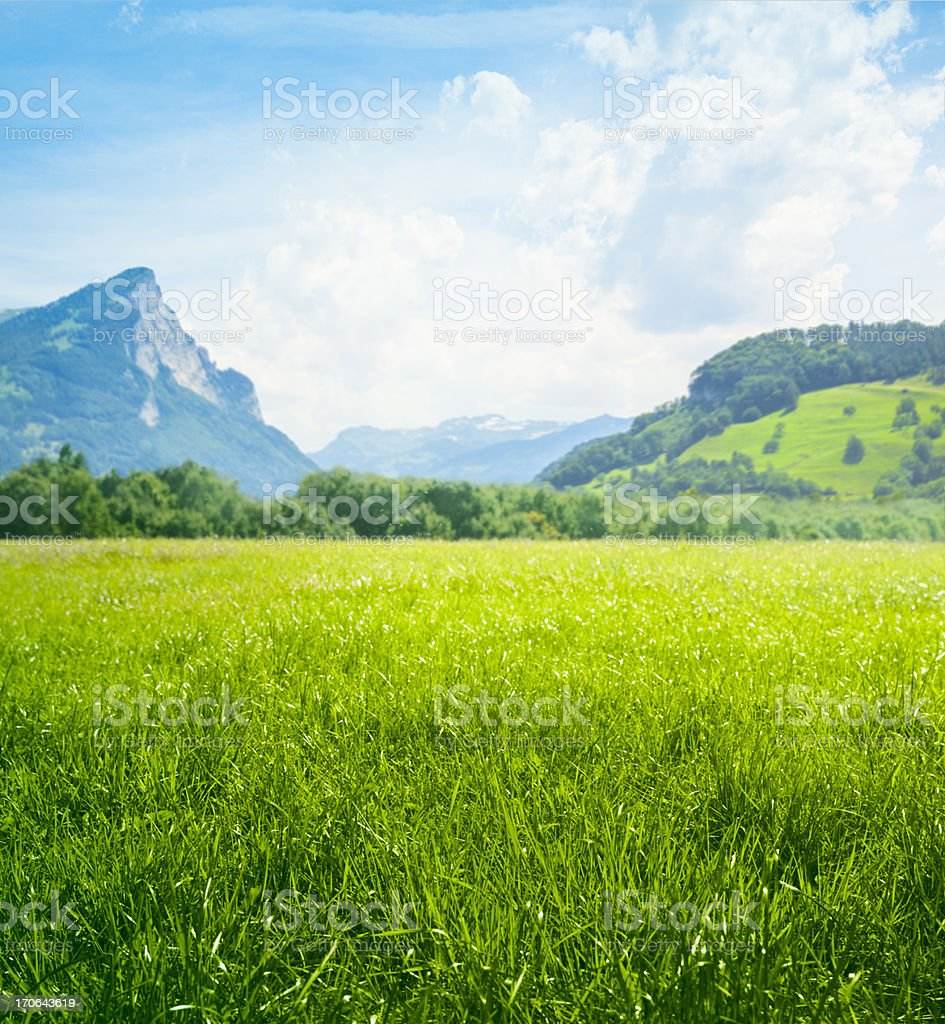 Fresh green meadow in mountains stock photo