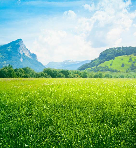 Fresh green meadow dans les montagnes - Photo