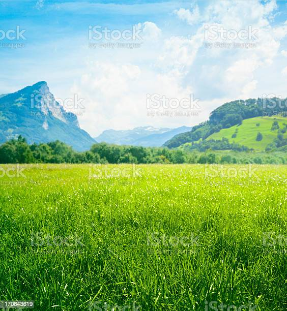 Photo of Fresh green meadow in mountains