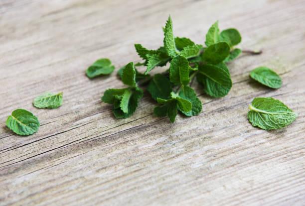 frische grüne minze als grenze - tropfenblatt tisch stock-fotos und bilder