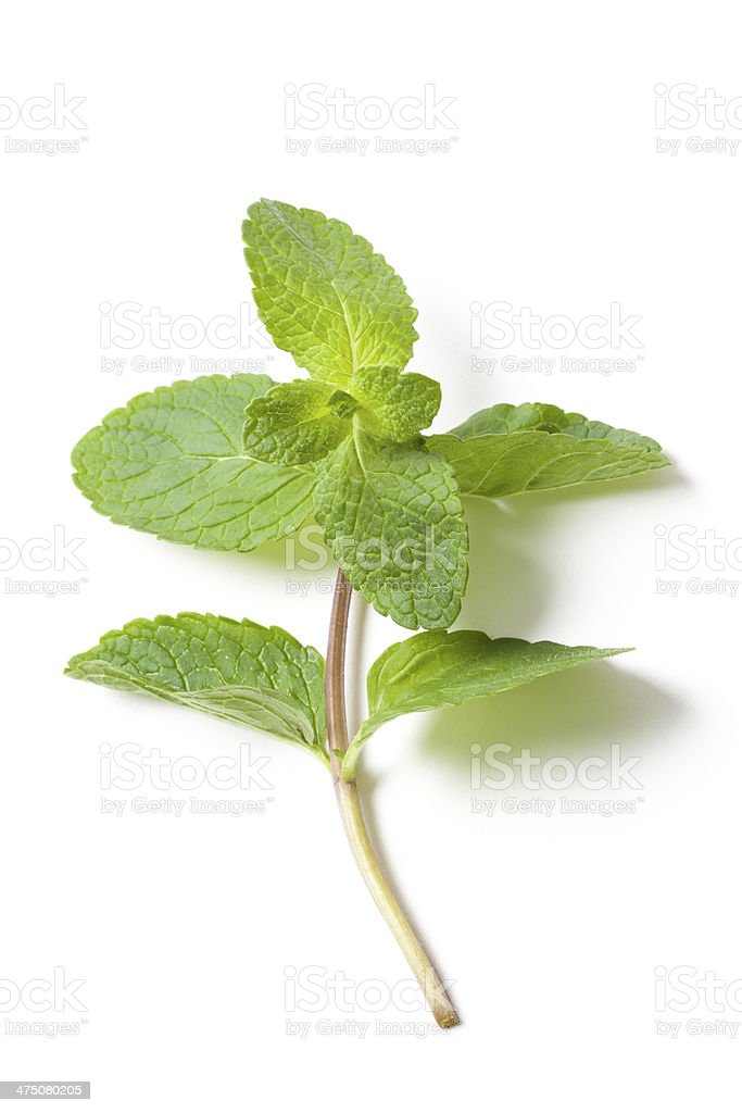 Fresh Green Mint Leafs on White stock photo