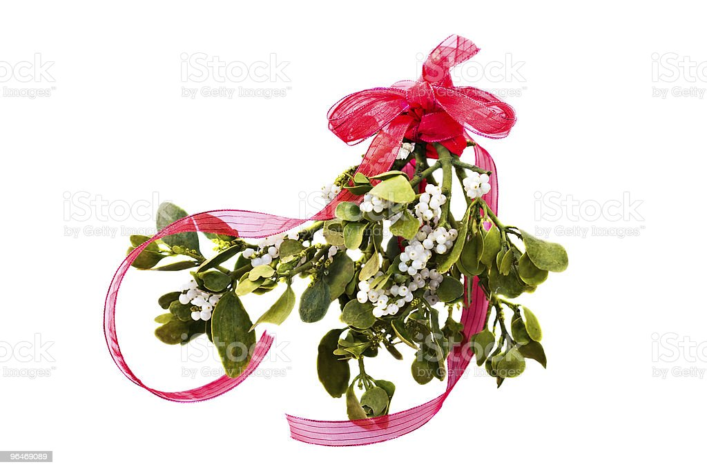 Fresh green mistletoe royalty-free stock photo