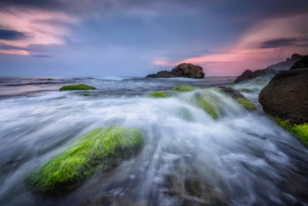 Fresh green morning Rocky beach seascape at sunrise rocky coastline stock pictures, royalty-free photos & images