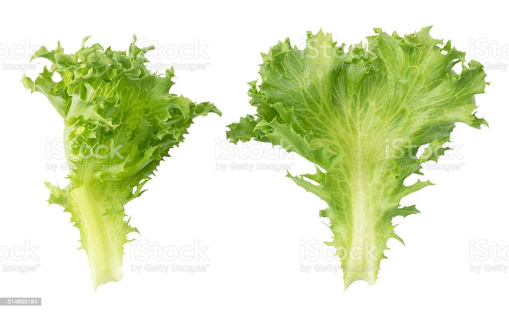 Salade de feuilles de chêne vert frais sur fond blanc - Photo