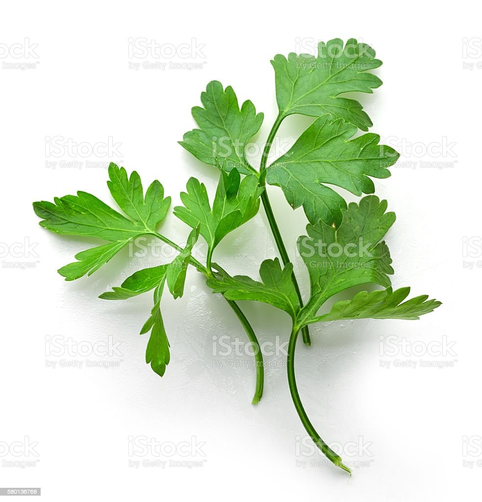 fresh green parsley leaves stock photo