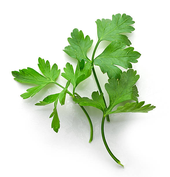 fresh green parsley leaves - parsley stock photos and pictures