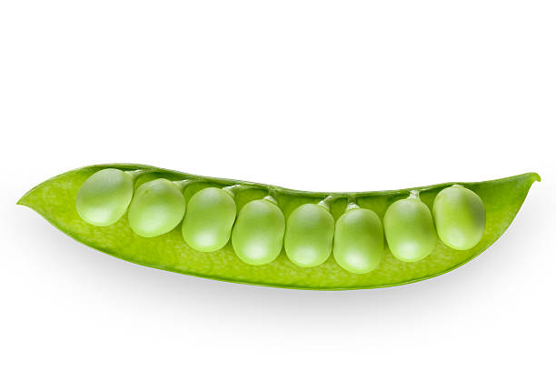 Fresh green pea Fresh green pea.  Photo with clipping path. plant pod stock pictures, royalty-free photos & images