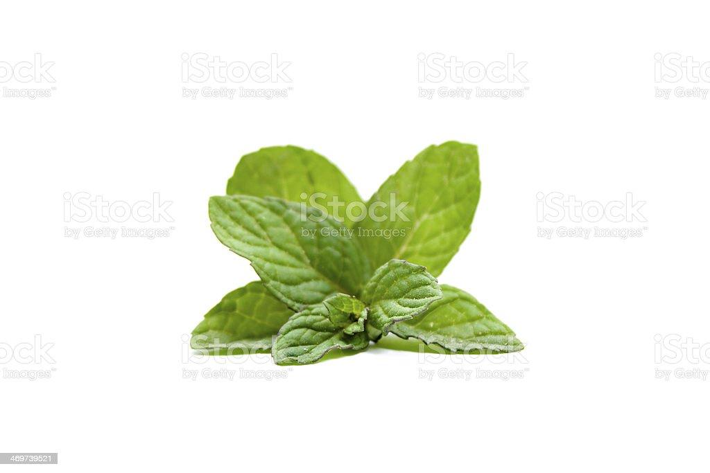 Fresh Green Peppermint Sheets stock photo