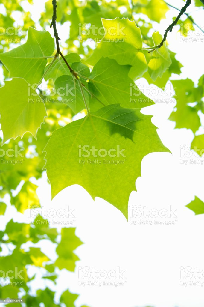 Fresh green foto stock royalty-free