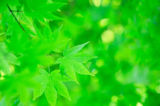 fresh grün - sonnenbrand heilen stock-fotos und bilder
