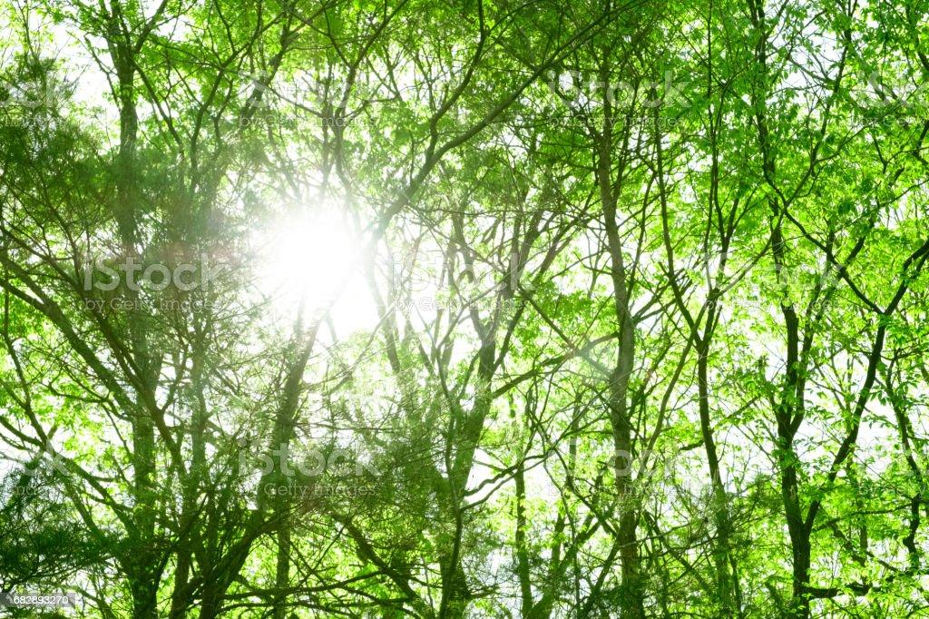 Frische grüne. Lizenzfreies stock-foto