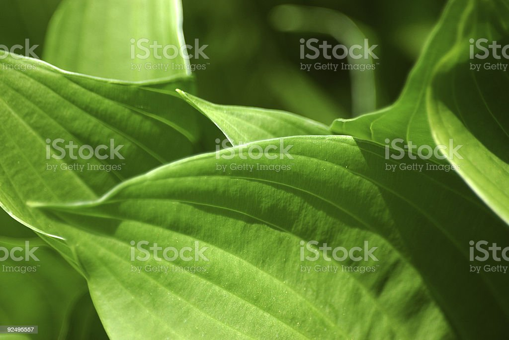 fresh green royalty-free stock photo