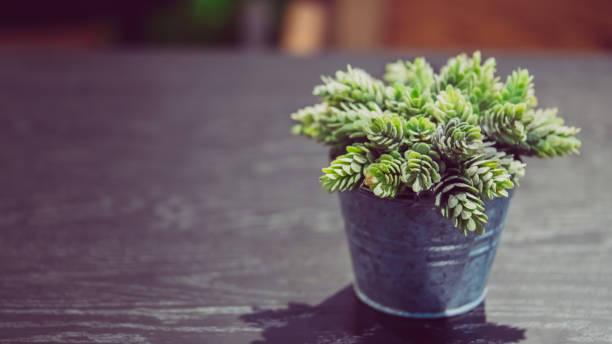 frische grüne pflanze im topf - indoor feen gärten stock-fotos und bilder