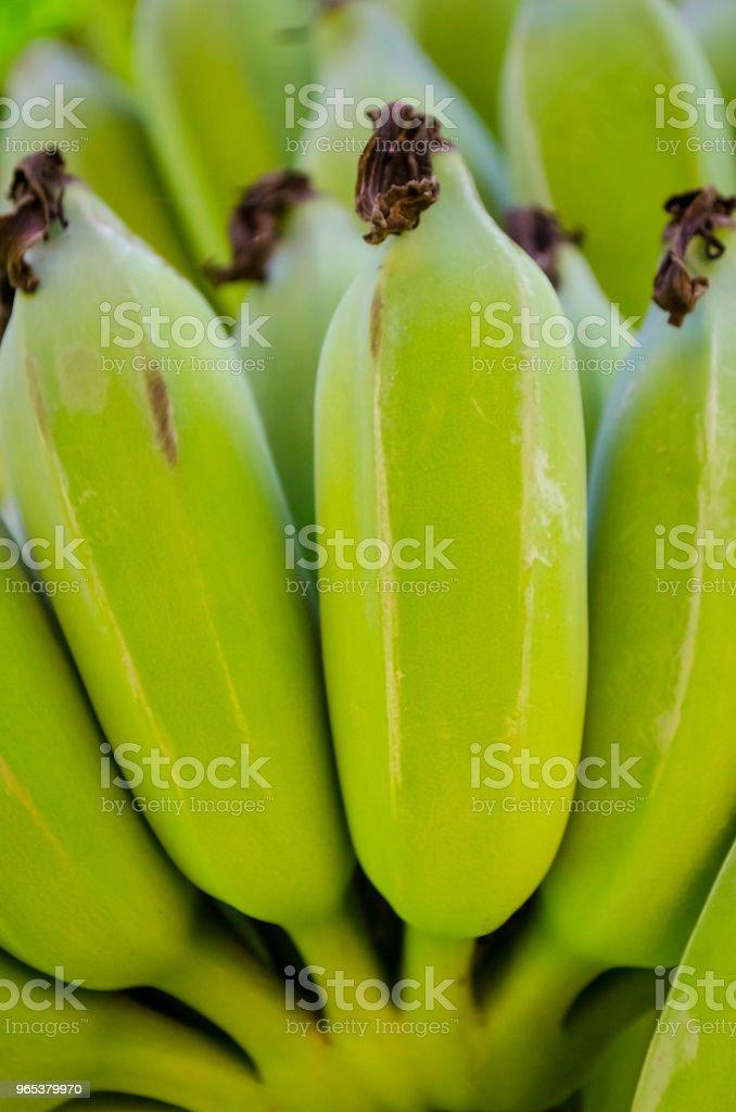 신선한 녹색 플렌틴 바나나 바나나 번치 전체 프레임 - 로열티 프리 0명 스톡 사진