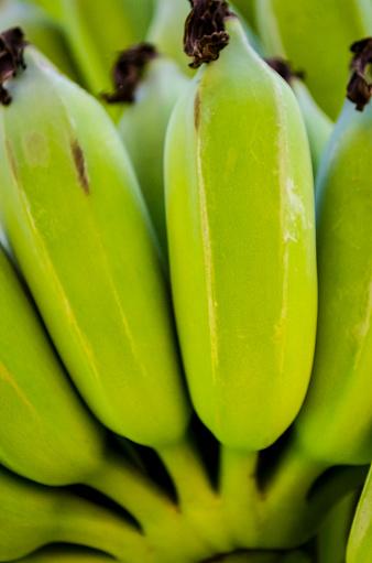 신선한 녹색 플렌틴 바나나 바나나 번치 전체 프레임 0명에 대한 스톡 사진 및 기타 이미지