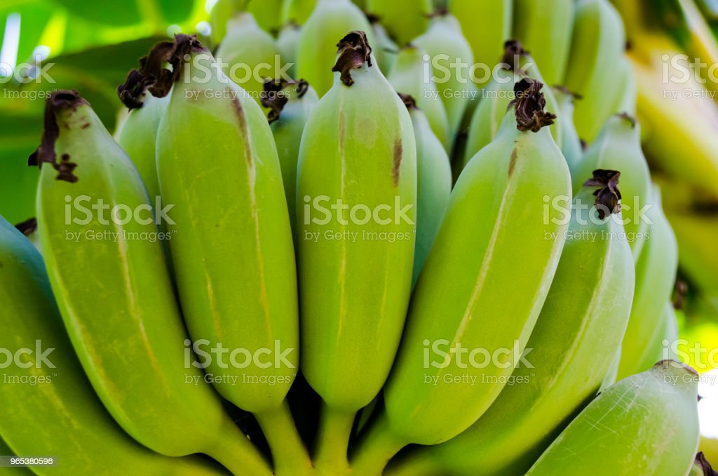 Fresh Green Plantain Banana Bunch Full Frame zbiór zdjęć royalty-free