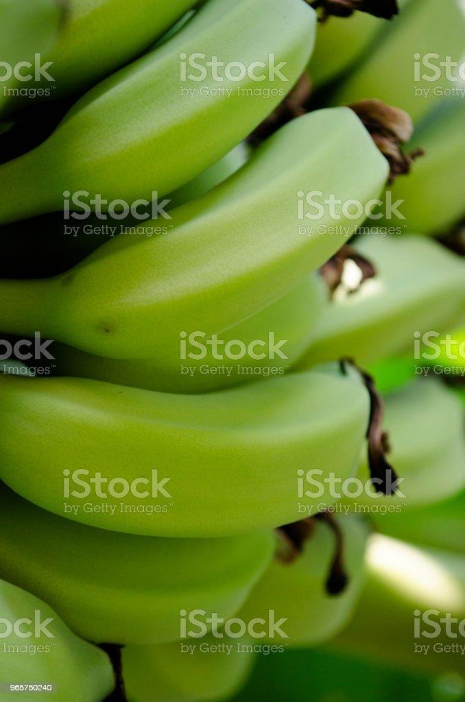 Verse groene weegbree banaan bos - Royalty-free Banaan Stockfoto