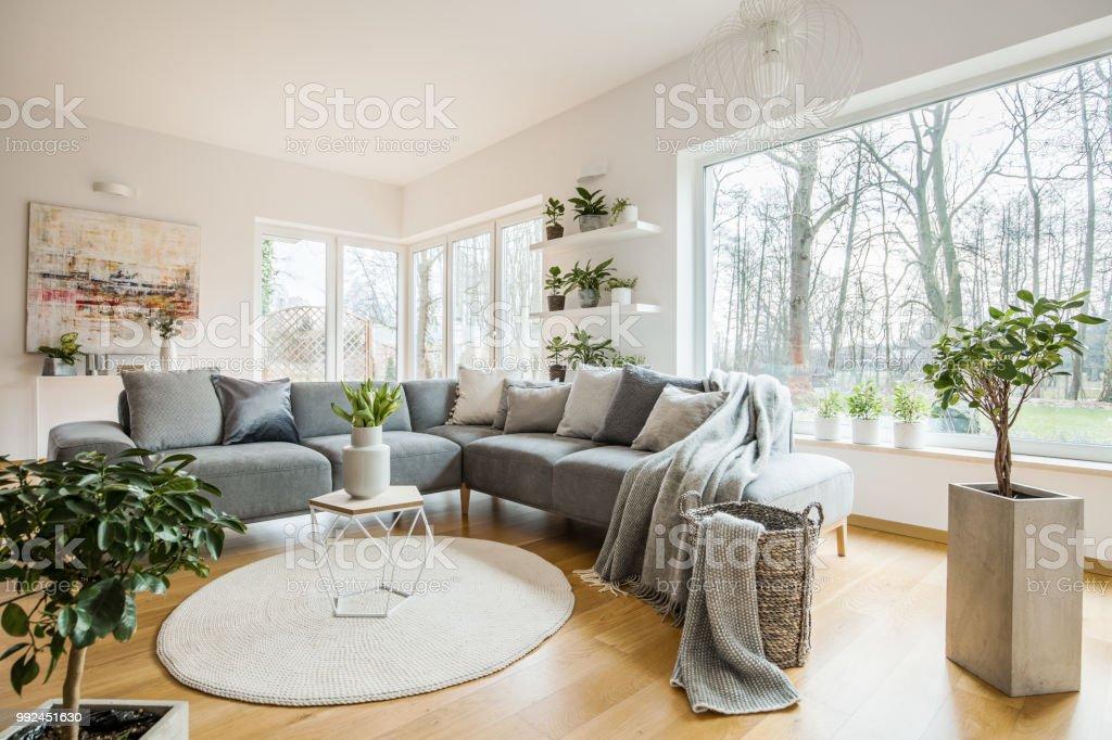 decoración fresca de la sala de estar Las Plantas Verdes Frescas En Interior Blanco Sala De Estar
