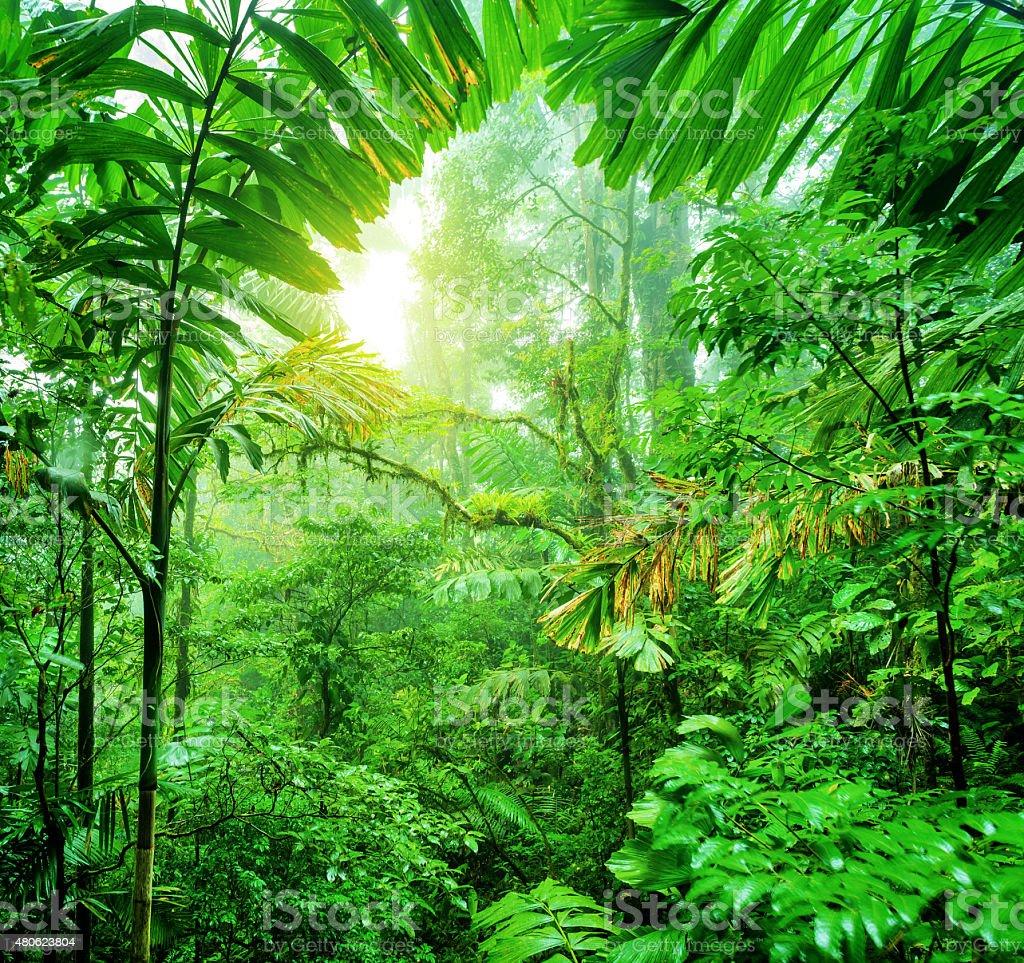 Fresh green rainforest stock photo