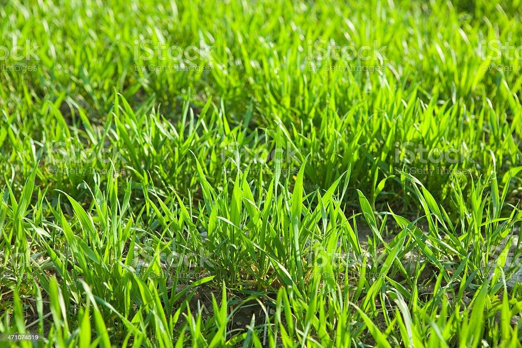 fresh green spring grass stock photo