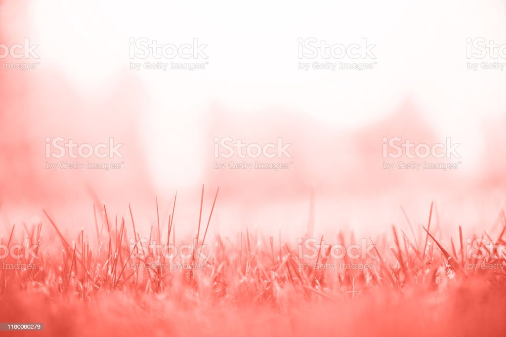 Fresh green spring grass with sun leaks effect, copy space. Soft...
