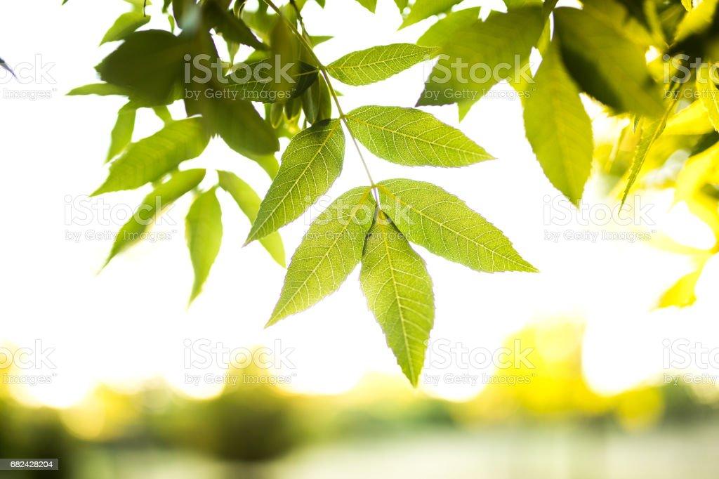 Printemps vert feuilles fraîches photo libre de droits