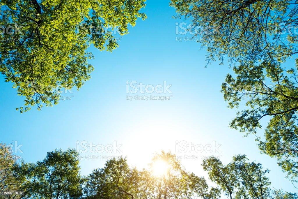 Fresh Green Spring Trees – Foto