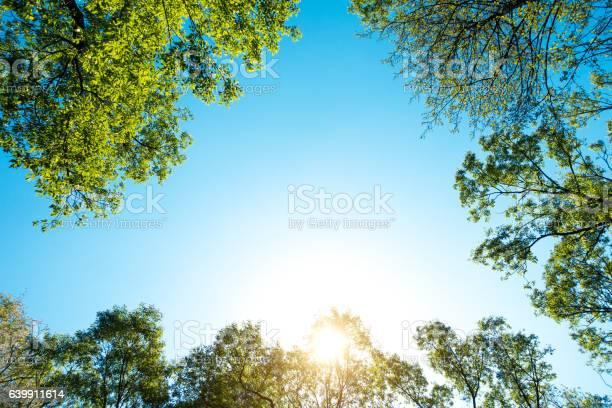 Photo of Fresh Green Spring Trees