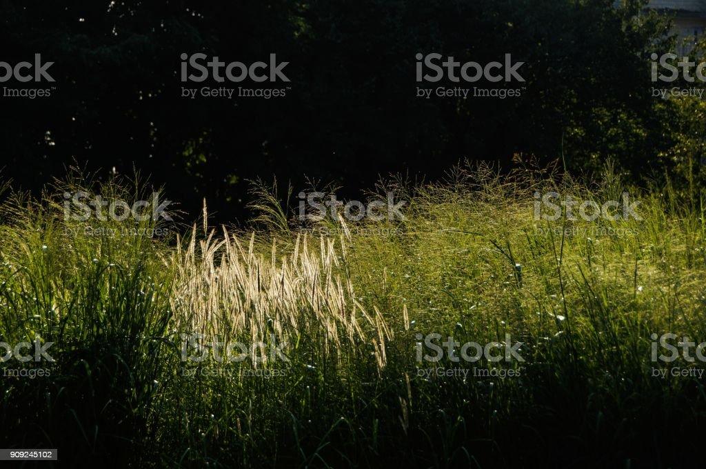 Fresh green sunny summertime background stock photo