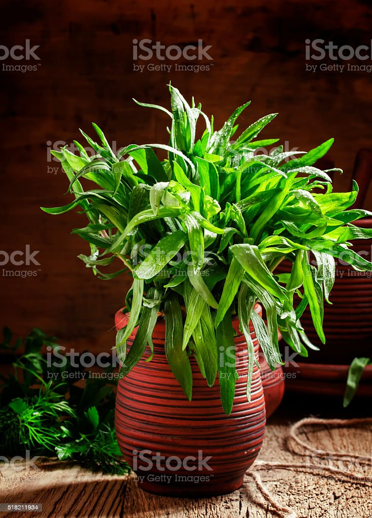 Fresh green tarragon in a beam in an earthenware pot stock photo
