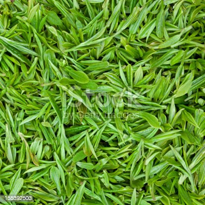 istock Fresh green tea leaves background 155392503