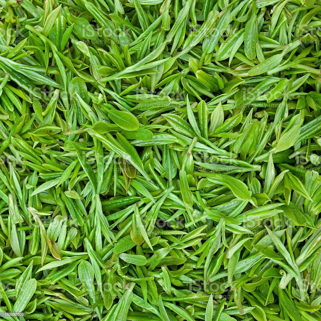Fresh green tea leaves background stock photo