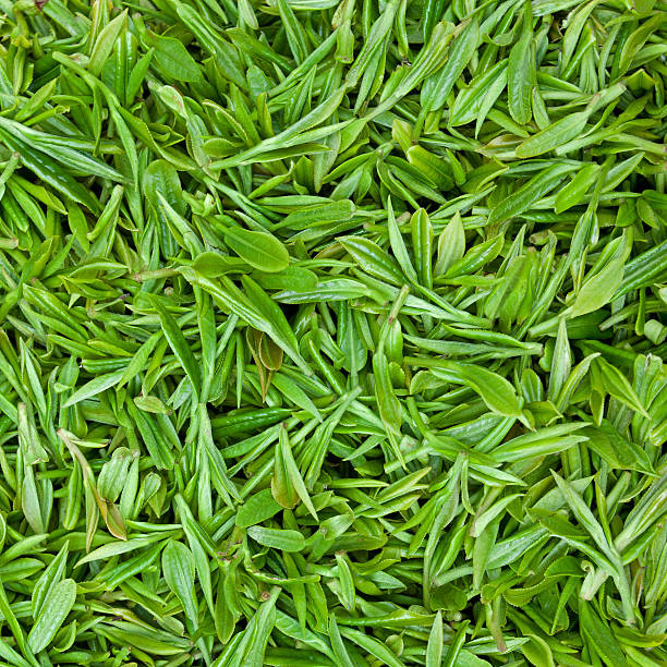 fresh green tea leaves background - tea leaf stock photos and pictures