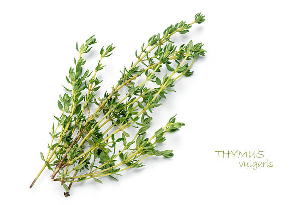 fresh green thyme, thymus vulgaris, isolated on white - thyme stock photos and pictures