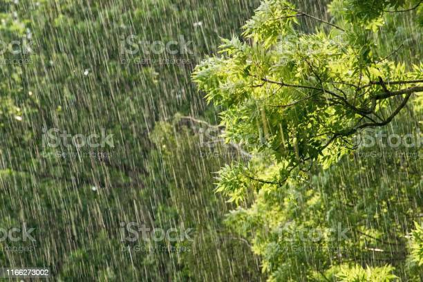 Photo of Fresh green tree branches in heavy rainfall - environment, nature preservation concept