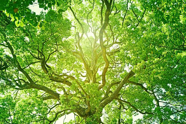 frais de green tree - paysage zen photos et images de collection
