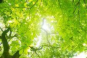 新鮮な緑の木