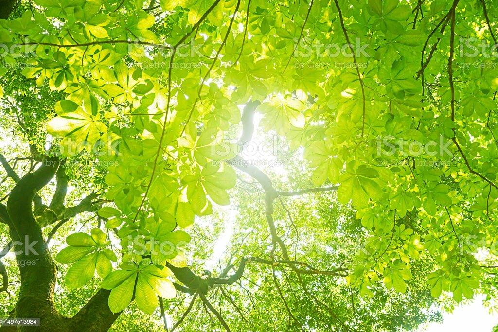Árbol verde fresco - foto de stock